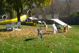Dogs running through leaves