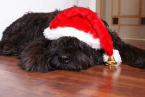 black dog sleeping with santa hat on