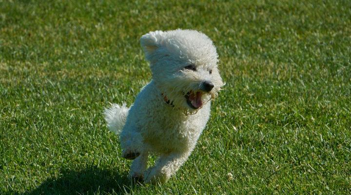 Happy Dog Running at the Dogwoods Mount Horeb WI