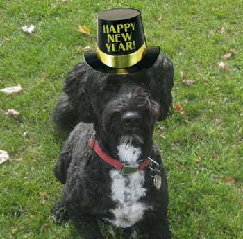 A New You Dog Wearing New Years Eve Hat The Dogwoods Mount Horeb WI
