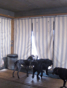 Dogs leaving the camp house The dogwoods mount horeb WI